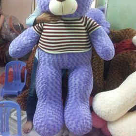 Gấu teddy 1m 1m2 1m4 1m6 1m8 2m áo len