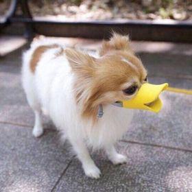 Rõ mỏm chó hình mỏ vịt size M giá sỉ