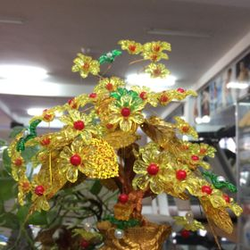 Chậu Hoa Hoàng Kim trưng Tết giá sỉ