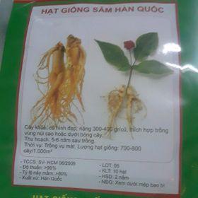 Hạt giống nhân sâm Hàn Quốc giá sỉ