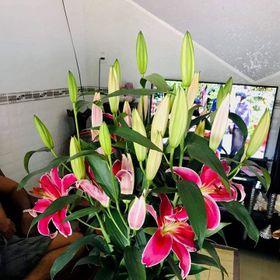 Hoa ly tết giá sỉ