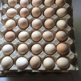 trang trại nguyên food cần tim đại lý nhà phân phối trứng gà ác trên toàn quốc giá sỉ