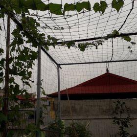 Lưới trồng cây leo giàn susu mướp bầu bí dưa lưới giá sỉ