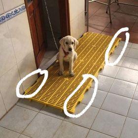 Tấm nhựa lót sàn heo,sàn chó,mèo giá sỉ