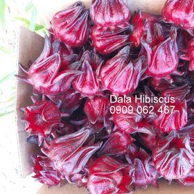 Dala Hibiscus - Hoa atiso đỏ tươi chưa tách hạt - bán buôn bán lẻ giá sỉ