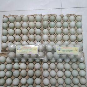 công ty nguyên food cân tìm đại lý, nhà phân phối trứng vịt cà cuống trên toàn quốc giá sỉ