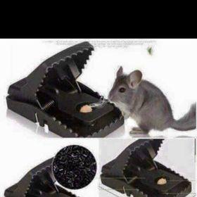 Bẫy chuột giá sỉ