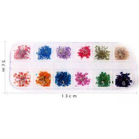 Khay 12 loai Hoa khô trang trí móng 3D - Hoa Mini giá sỉ